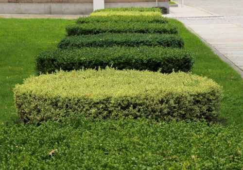 Hedge trimming services available from MyLawnCare